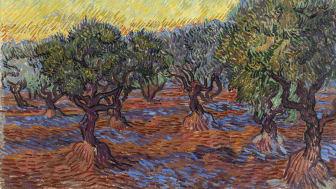 Vincent van Goghs målning Olivskog, Saint-Rémy lånas ut till stor internationell utställning. Foto: Hossein Sehatlou