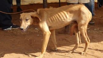 WTG-Hund-Malawi-Behandlung