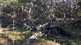 Brännefjäll. Foto: Länsstyrelsen i Västra Götaland