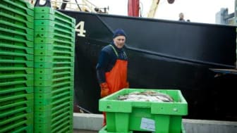 Nya vägningsregler för fiskerinäringen 1 oktober