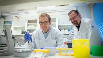 Henrik Green och Niclas Björn studerar hur genetiska faktorer påverkar individens känslighet för biverkningar av cancerbehandlingar.