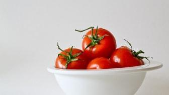 Att kasta tomater kring ett förlorat vårdval klär inte en styrande allians