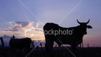 """Illustration till seminariet """"Shrinking Livestock's Long Shadow"""""""