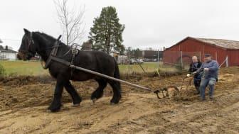 Styreleder Knut Storberget markerte byggestart med hest og plog – under kyndig veiledning av Ole Victor Larsen.