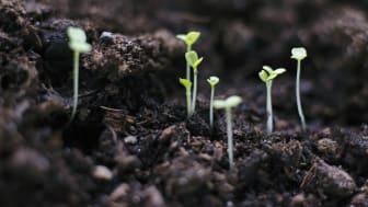 Ny digital plattform för ekologiska lantbruk