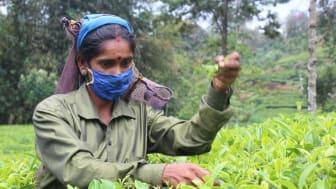 Teplockerskan Kokila på Sri Lanka Foto Sachithra Kamburapola.jpg