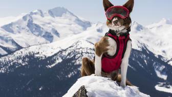 Premiär för Superpower Dogs på Cosmonova! Foto: Danny Wilcox Frazier, agentur VII, för Cosmic Picture