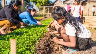 Skolträdgårdar lär barn i Kambodja om klimatet