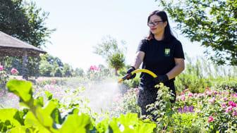 Nytt jobb i nytt land via Yrkes-SFI Trädgård på Hvilan Utbildning