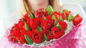 Tulpan och amaryllis är kärlekens blommor