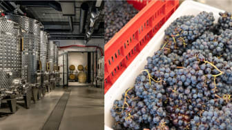 Winemaking 2-harvest2020