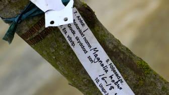 Magnoliaträd planterades vid spadtaget av Roth Fastigheter för bostäder längs Hyllie allé.