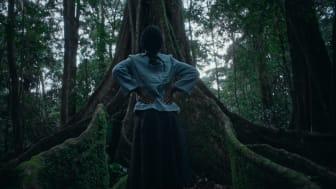 Lilian Ochieng tittar upp på ett av de mäktiga träden i Kisumu, Kenya, i Vi-skogens nya kampanjfilm. Foto: Robin Asselmeyer