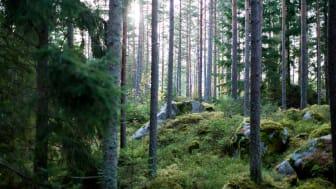Bland skog, berg och sjöar ska ett nytt bostadsområde växa fram. Foto: Engaholm