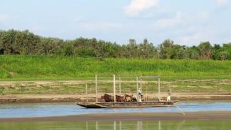Farming in Llanos de Mojos today, credit Ruth Dickau