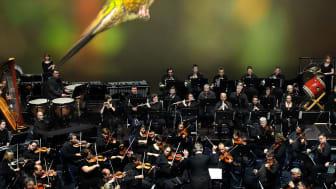 Planet Earth II - Live in Concert, Hummingbird