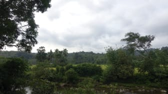 Bujang Raba, Sumatra Indonesien