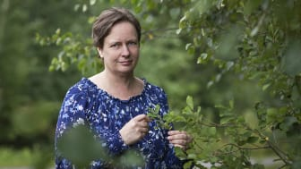 Swecon johtava asiantuntija, biologi Tarja Ojala