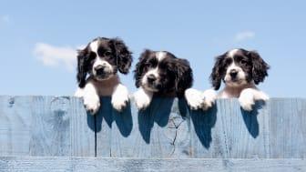 Für ein neues Haustier braucht es Zeit zu Hause. Zumindest die haben viele Menschen aktuell - dass es dadurch zu einem wahren Hundeboom in Deutschland kam, das bestätigen auch die Versicherungszahlen der Gothaer.