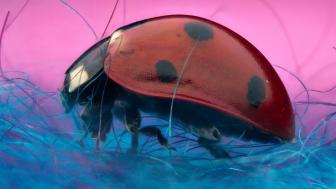 Quels insectes allez-vous croiser cet été ?