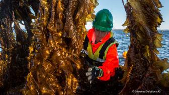 Foto: Illustrasjonsfoto Seaweed Solutions AS