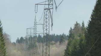 Baumeinfall in Freileitung im Landkreis München