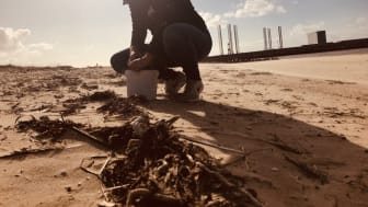 Fiskeri og Søfartsmuseets biolog, Melanie Brauckhoff, finder nemt affald i opskyllet på Esbjerg Strand. Selvom stranden ved første øjekast ser ren ud, er realiteten desværre stik modsat.
