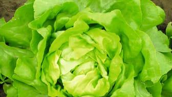 Snart blir det salat i vaskekjelleren på Sinsen. Foto: iStockphoto
