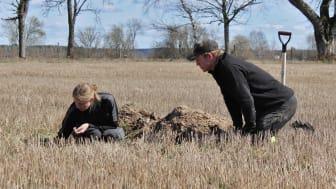 Genom att gräva en grop och undersöka hur jorden ser ut på olika nivåer i marken, så får man direkt information om hur den fungerar som växtplats för grödan. Bild: Jordbruksverket