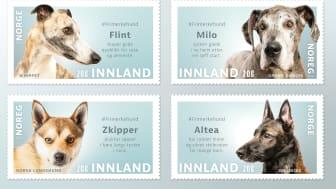 Fire forskjellige hunderaser med hunder som har ulike historier er valgt ut til å komme på frimerke.