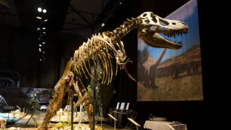 Världsutställning till Halmstad: Dinosaurium - historiens största upplevelse