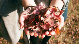 Dags att göra det sista trädgårdsarbetet innan vintern. Från och med nästa vecka hämtar VA SYD in trädgårdsavfallet för sista gången innan vinterpausen.