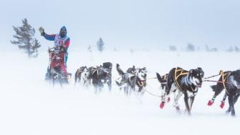 De tøffeste hundekjørerne skal kjøre 636 km under Femundløpet. Når de ankommer Trysil har de kjørt 224 km. Foto: Femundløpet