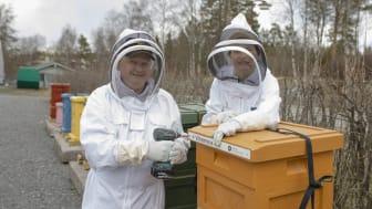 Rektor Hans Adolfsson och forskaren Natuschka Lee monterar namnskylten på en av bikuporna vid Umeå universitet. Foto: Mattias Pettersson