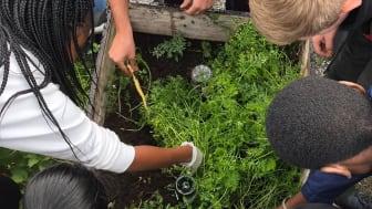 Bjørnholt videregående skole i Oslo får støtte til utstyr for videreutvikling av skolehagen. (Foto: Abbey Marie Tovshus Schneider)