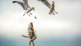 © Caroline Paux, France, Shortlist, Open competition, Natural World & Wildlife, 2020 Sony World Photography Awards