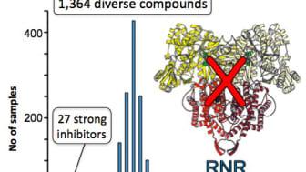 RNR-enzym II