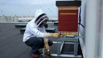 Miljöprisade Brf Hilda installerar Malmös högst placerade bikupor