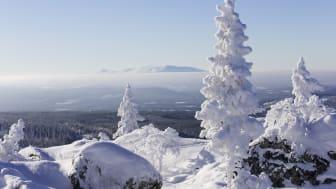 Vintervackert i Vemdalen