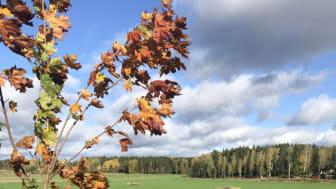 Foto: Kjell Andersson