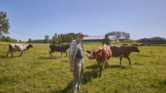 Arla tuo maitotölkkeihin lehmien hyvinvoinnista kertovan merkin