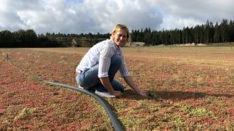 Sedummattor med biokol klara att levereras till kund meddelar Lina Pettersson från Veg Tech