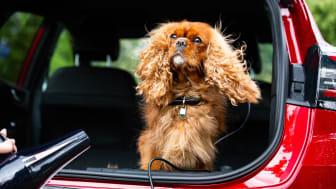 Fords pop-up-spa för hundar demonstrerar hur Fords MegaBox fungerar utmärkt för hundbad.