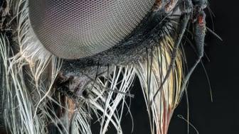 © Adalbert Mojrzisch, Germany, Finalist, Professional competition, Natural World & Wildlife, 2020 SWPA (1)