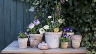 Komposition av svenskodlade växter. Foto: Ida Magntorn