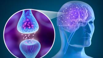 Människohjärna och aktiv receptor. Foto: Istock.