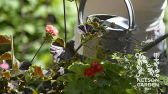 Nelson Garden återkallar den flytande växtnäringen Biobact