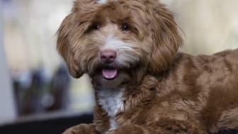 Många hundar är rädda för åska, men det finns saker du kan göra för att hjälpa din rädda kompis.