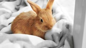 Myksomatoosiin on olemassa rokote, joka saadaan Suomeen elokuussa. Sen avulla lemmikkikanit voitaisiin pelastaa tältä korkean kuolleisuuden omaavalta sairaudelta.