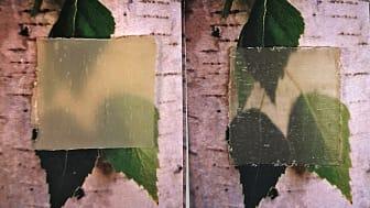 Så här ser den senaste versionen av det transparenta träet ut.